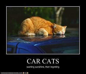 CAR CATS