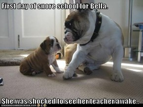 First day of snore school for Bella.  She was shocked to see her teacher awake..