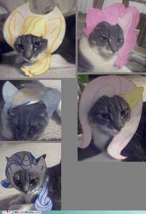 My cat modeling various MLP hairs.