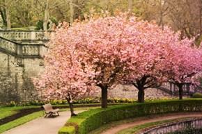 The Residence Garden in Wuerzburg, Bavaria in Full Bloom
