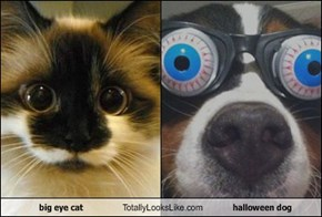 big eye cat Totally Looks Like halloween dog
