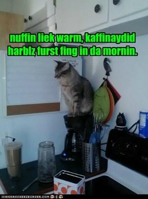 nuffin liek warm, kaffinaydid harblz furst fing in da mornin.