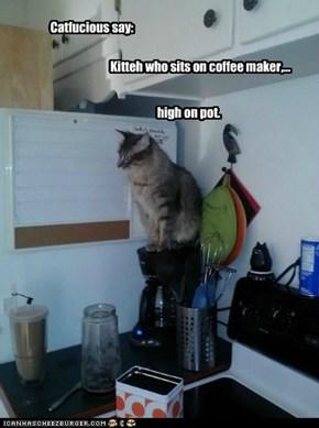 Catfucious say: