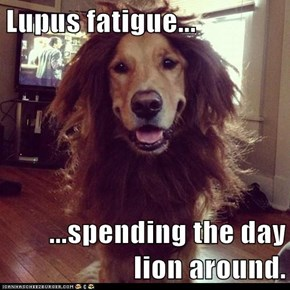 Lupus fatigue...  ...spending the day lion around.
