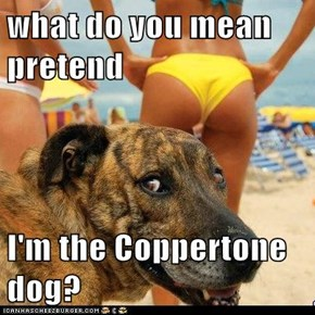 what do you mean pretend   I'm the Coppertone dog?