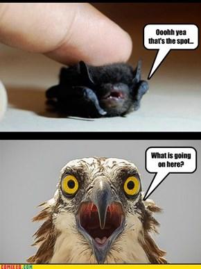 Shocked Hawk