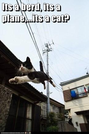 Its a berd, its a plane,...its a cat?