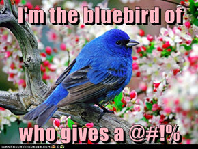 I'm the bluebird of  who gives a @#!%