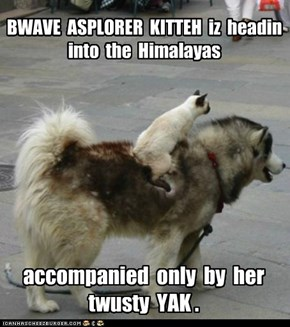 BWAVE  ASPLORER  KITTEH  iz  headin  into  the  Himalayas