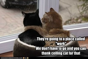 "They're going to a place called ""work"" We don't have to go and you can thank ceiling cat for that"