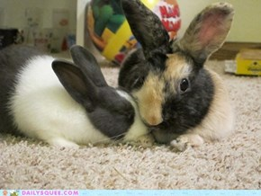 Reader Squee: Bunny Snuggles