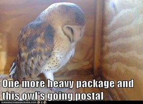 One more heavy package and this owl's going postal