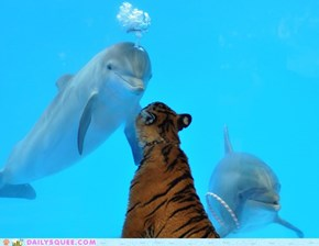 Tiger cub watching Dolphins