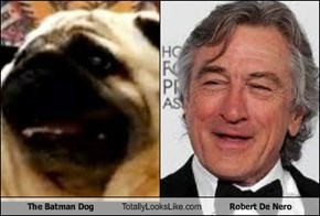 The Batman Dog Totally Looks Like Robert De Nero