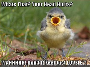Whats That? Your Head Hurts?  WAHHHHH! Don't It Feel Just LOVELEY!