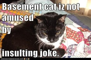 Basement cat iz not amused by insulting joke.