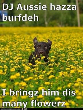 DJ Aussie hazza burfdeh  I bringz him dis many flowerz