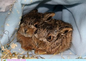 Squeeist Little Bunnies ever!