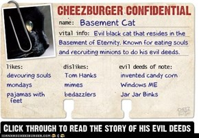 Cheezburger Confidential Presents: Basement Cat