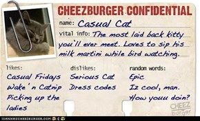 Cheezburger Confidential Presents: Casual Cat