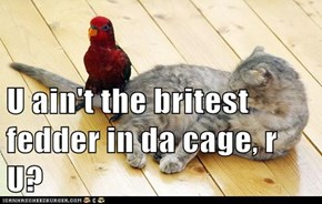 U ain't the britest fedder in da cage, r U?