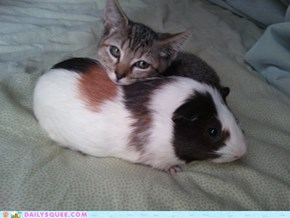 Reader Squee: Pigs Are Friends, Not Food