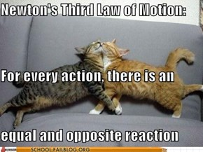 The Physics of LOLcats!