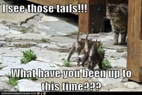 I see those tails!!!  What have you been up to this time???