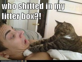 who shitted in my litter box?!