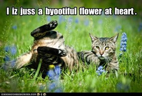 I  iz  juss  a  byootiful  flower  at  heart .
