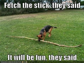 Fetch the stick, they said  It will be fun, they said