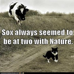Sox always seemed to be at two with Nature.