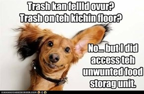 Trash kan fellld ovur?   Trash on teh kichin floor?