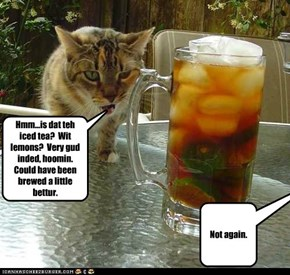 Hmm...is dat teh iced tea?  Wit lemons?  Very gud inded, hoomin.  Could have been brewed a little bettur.