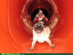 The Expression On This Dog's Face = PRICELESS