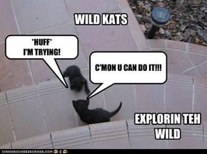 Wild Kats Explorin!