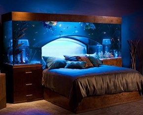 Aquarium Bed of the Day