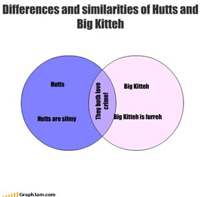 Differences and similarities of Hutts and Big Kitteh