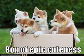 Box of epic cuteness