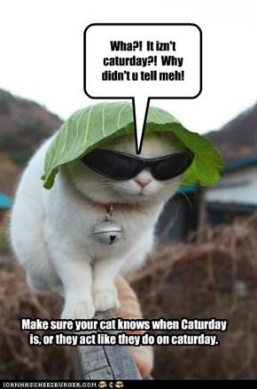 Wha?!  It izn't caturday?!  Why didn't u tell meh!