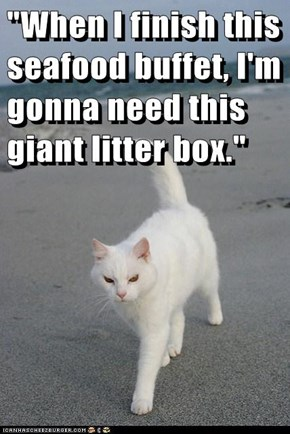 """When I finish this seafood buffet, I'm gonna need this giant litter box."""