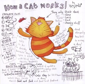 How a Cat Works: Science Finally Gives Us Some Answers