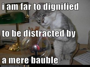 i am far to dignified  to be distracted by a mere bauble