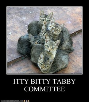 ITTY BITTY TABBY COMMITTEE