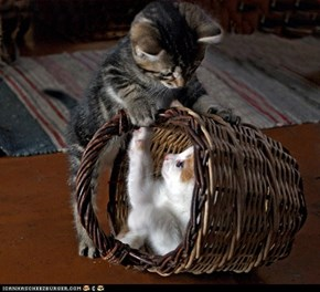 Cyoot Kittehs of teh day; Basket Buddies