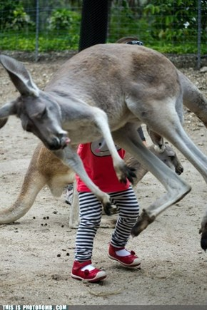 Kangaroo Bomb