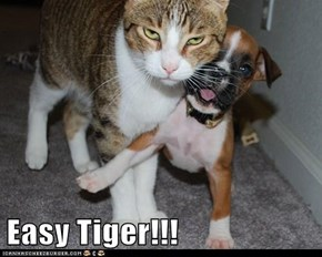 Easy Tiger!!!