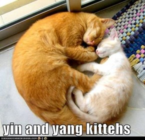 yin and yang kittehs
