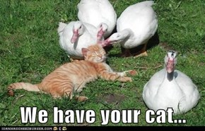 We have your cat...