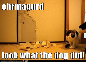 ehrmagurd  look what the dog did!